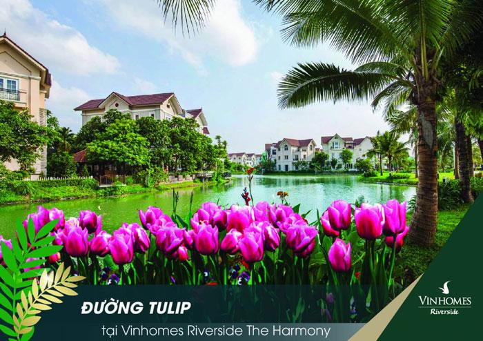 Khu biệt thự Vinhomes Riverside Tulip- Vinhomes Harmony Long Biên